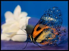 5º Lugar - Milagros Goni (Clube do Fotógrafo de Caxias do Sul) Tags: