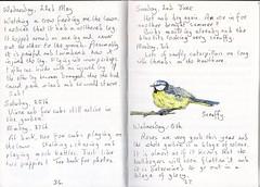 Bluetit (Hornbeam Arts) Tags: scruffy moulting bird garden
