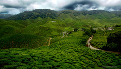 Life! And Life Abundantly! (J316) Tags: cameron highlands j316 a77 sony dpsc 10mm tamron tea plantations green titiwangsa banjaran malaysia mountainrange tropics