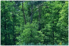 In the forest - Im Wald (b_kohnert) Tags: baum bäume blätter blüten colors farben forest germany green grün hessen kreisgrosge rau landscape landschaft licht light natur nature pflanzen trees wald wood