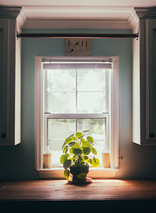 It faces west (Sarah Rausch) Tags: windowwednsdays window west sony 50mm 18 laundryroom pilea houseplant