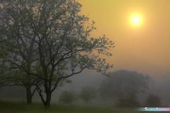 Sun Just UP 😊 *A Beautiful Nature* (iLOVEnature's Photography Inspiration) Tags: morning trees usa sun sunlight mist chicago macro tree nature grass misty fog forest sunrise landscape dawn us illinois foggy sunray lisle themortonarboretum forestreserved sunjustup abeautifulnature