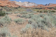 Snow Canyon State Park (magnetic_red) Tags: road winding grass brown sage green landscape mountains redrocks sandstone utah snowcanyonstatepark americanwest