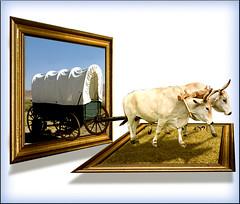 Pioneers (jaci XIV) Tags: pioneiros carroça bois animal viagem veículo oob pioneers cart oxen trip vehicle