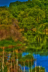 Stream (AChucksEyeView) Tags: water trees reeds nature vibrant landscape