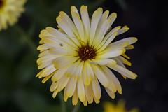 IMG_7949 (Lightcatcher66) Tags: baltrum 2018 flora lightcatcher66