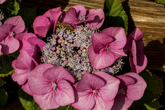 IMG_7754 (Lightcatcher66) Tags: baltrum 2018 flora lightcatcher66