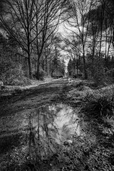 Woodland walk (paullangton) Tags: woodland hertfordshire mono bw trees path landscape water reflection monochrome wood forest nature countryside canon sky skancheli