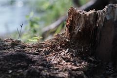 Shadows of Nature (Jontsu) Tags: nature luonto wood puu fuji fujifilm xt3 helios suomi finland bokeh