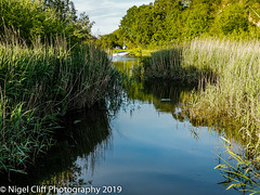 Ridge 31.05. 201900008 (Nigel Cliff) Tags: corfecastle dorset kimmeridgebay tynehamvillage
