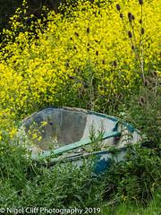 Kimmeridge Bay 31.05. 201900031 (Nigel Cliff) Tags: corfecastle dorset kimmeridgebay tynehamvillage