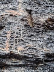 Kimmeridge Bay 31.05. 201900025 (Nigel Cliff) Tags: corfecastle dorset kimmeridgebay tynehamvillage