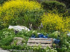 Kimmeridge Bay 31.05. 201900029 (Nigel Cliff) Tags: corfecastle dorset kimmeridgebay tynehamvillage