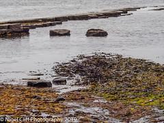 Kimmeridge Bay 31.05. 201900010 (Nigel Cliff) Tags: corfecastle dorset kimmeridgebay tynehamvillage