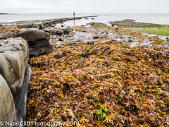 Kimmeridge Bay 31.05. 201900008 (Nigel Cliff) Tags: corfecastle dorset kimmeridgebay tynehamvillage
