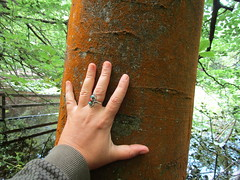 IMG_0693 (belight7) Tags: hand tree bark pond burnham beeches nature uk england