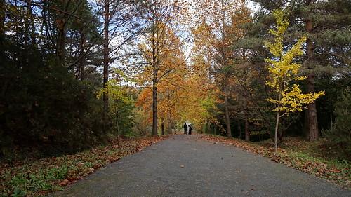 autumn at Atatürk arboretum.  İstanbul,Turkey