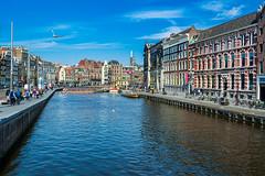 Amsterdam (achavtur) Tags: birds vikingrivercruise gulls mewgull netherlands amsterdam nature northholland