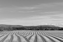 Out here in the fields (ambo333) Tags: samco samcosystem field fields cumbria england uk