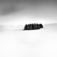 Winter (frodi brinks photography) Tags: trees snow blackandwhite frodibrinks iceland winter