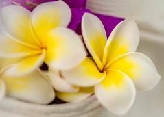 Dreaming in color (risaclics) Tags: make me smile 60mmmacro frangiapani june2019 nikond610d flora flowers purple violet white yellow makemesmile