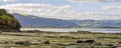Marengo 2019-06-01 (5D3_0321-23) (ajhaysom) Tags: canoneos5dmkiii canon100mmlmacro apollobay greatoceanroad australia beach rockpools marengo 100xthe2019edition 100x2019 image45100