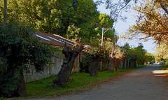 Villa Ruiz-Calle-02 (jagar41_ Juan Antonio) Tags: argentina villaruiz buenosaires provinciadebuenosaires sanandresdegiles pueblo pueblos