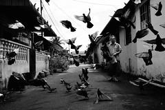 Morning Feed (sabirin noor) Tags: malaysiastreetphotography fujifilm x100t happyplanet asiafavorites