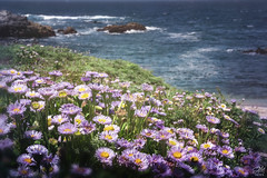 Purple Beach Posies (amymedina.photoart) Tags: