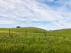 Landscape Series: Petaluma Hills (harminder dhesi photography) Tags: california green nature clouds landscape outdoors spring hills bayarea norcal northbay driving view sonoma petaluma sonomacounty vsco snapseed vscocam