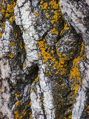 Home To Someone (jaxxon) Tags: 2019 d610 nikond610 jaxxon jacksoncarson nikon nikkor lens nikon105mmf28gvrmicro nikkor105mmf28gvrmicro 105mmf28gvrmicro 105mmf28 105mm macro micro prime fixed pro abstract abstraction bark lichen nature wood tree surface texture trunk ecosystem