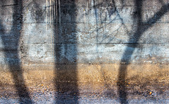 Tree Scene (jaxxon) Tags: 2019 d610 nikond610 jaxxon jacksoncarson nikon nikkor lens nikkor70200mmf28e nikon70200mmf28e afsnikkor70200mmf28efledvr fledvr f28e 70200 70200mm 70200mmf28 f28 28 afs vr zoom telephoto pro abstract abstraction concrete wall shadow trees shadows tree limb limbs trunk scene landscape layers strata