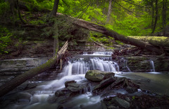 Gray's Creek, IBM Glen (ascholtz101) Tags: 2019 adobelightroomclassiccc adobephotoshopcc andrewscholtz broomecounty centralny centralnewyork grayscreek ibmglen johnsoncity nys newyorkstate nikond7200 sigma1750mmf28exdcoshsmfldlargeaperturestandardzoo us usa union unitedstates upstateny upstatenewyork watermancenter watermanconservationeducationcenter ascholtz101 brook color creek forest landscape le longexposure morning nature outdoor outdoors outside slowwater spring stream waterfall waterfalls wideangle woods sigma1750mmf28exdcoshsmfldlargeaperturestandardzoom
