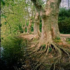 lac Marion (Hasselblad SWC) (Guy Baylacq) Tags: swc hasselblad biogon38 greenfuji