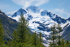 156/365 View from Byron Glacier Trail (OhWowMan) Tags: ohwowman nikon d3300 acdseepro9 my2019challenge 365project animageaday dailyphotography alaska scenic spring springtimeinalaska scenery 365the2019edition 3652019 day156365 05jun19 portagevalley byronglaciertrail glacial globalwarming nature landscape mountains trees trails tree snow ice outdoors outside outdoor outandabout trail walk blueice trailofblueice nationalforestservice nikkor