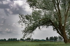 (Woewwesch) Tags: spring clouds outdoor tree leaves sky grey pastures biking landscape