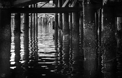 Under the Wharf (amymedina.photoart) Tags: bw black blackandwhite monochromatic wood pier waves wharf monterey montereybay reflections