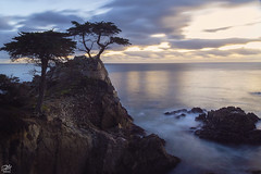 Lone Cypress (waves_and_wonders) Tags: lone cypress 17 mile drive cliff seascape seascapes tree landscape photography sky clouds