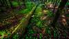 Niinisaari, East-Helsinki 🌴🌴 (Esa Suomaa) Tags: helsinki finland suomi green forest oldforest trees tree scandinavia saveourtrees planetearth summer sunrise sunset europe olympusomd