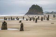 Ghost Forest (Tom Fenske Photography) Tags: neskowin oregon coast ghostforest petrifiedwood stumps beach ocean sunset earthquake cascadia sand