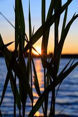 Summer sunset (Antti Tassberg) Tags: järvi bokeh kesä suomi landscape espoo auringonlasku pitkäjärvi aurinko finland lake scandinavia sun sundown sunset reflection