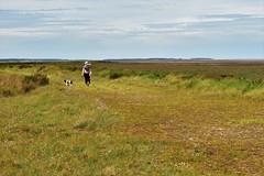 A walk on the marsh. (Hidden in the flash.) Tags: countryside marsh morston norfolk coast sea water tranquil nikon d3400 calm