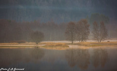 A Peaceful Morning (2000stargazer) Tags: kalandsvatnet fana kalandsvika bergen norway morning morninglight mist trees forest silhouettes lake waterscape landscape nature april spring canon getty fanaposten