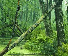 Morning Mist after a Summer Rainstorm (klauslang99) Tags: klauslang nature naturalworld northamerica canada mist fog forest woods charleston lake provincial park ontario green