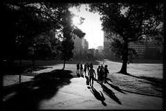 untitled (Albion Harrison-Naish) Tags: sydney streetphotography nsw newsouthwales thedomain australia iphone hipstamatic blackeyssupergrainfilm lowylens albionharrisonnaish iphonese