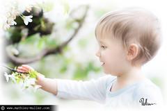 s'acharner sur l'essentiel (Mathieu Muller) Tags: outdoor extérieur printemps spring bébé baby kid child enfant boy dof depthoffield minimaldof fleurs flowers arbre tree mathieumuller wwwmathieumullercom