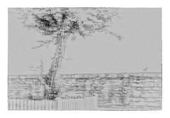 Traum-Baum (wolfiwolf) Tags: tree wall composition fence wolf grain jazz creation butler elysium ich challenge hismastersvoice bluenote farkas genial wolfi farky kunsti würdigung multiversum fuddler anonymousvisitor arminfuchs wolfskunst eneamaemü thomaslistl dergenialste wolfiwolf wolfiart meinneuesbildlen wolfiwolfy kleinewolfis jazzinbaggies lavillelaplusdangereuse fuddlitz lassetunsstillwerden crystal universe zentrum quer neu vollmond stube warum universum schöpfung existenz vollkommen unendlichkeit my ursprung resonanz offenbaren stüben tanzendesresonanzuniversum puttlerseht quantensuppe marieschen quantensymphonie seinseinsein mood arbrederêve käppele drisd