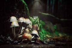 """""""Todas las setas son comestibles....algunas, una sola vez"""". (JoseMi Campos) Tags: fotografia naturaleza paisaje huawei macro setas landscape forest"""
