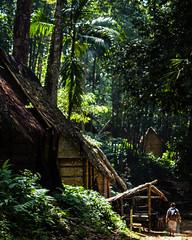 Baduy Luar Regina Brigitta Photography (Regina Brigitta) Tags: pesonaindonesia baduy baduyluar banten indonesia nationalgeographic ngc tree pohon nature badui