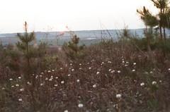 Kama river, 12.05.2019 (Madilyan) Tags: film filmphoto filmphotography filmfeed filmisnotdead pentax kodak kodakvision250d kodakvision kama analog analogphotography analogworld analogphoto udmurtia russia 35mm 35mmrussia